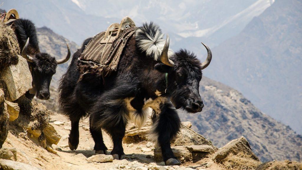 Nepal - trip.am